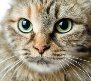 Cats with cancer could benefit from a different kind of treatment.