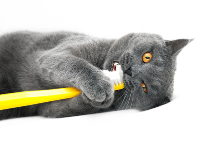 Brushing you cat's teeth is a good way to prevent dental disease, one of the top ten health issues in cats.