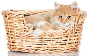 Metronomic Chemotherapy is a different approach to treating cancer in cats.