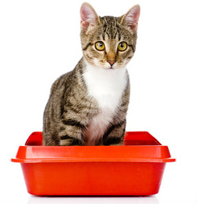 Special cat litter formulas can help you monitor your cat's health.