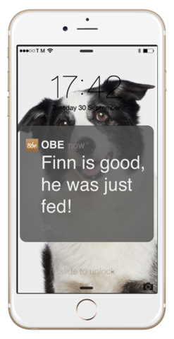 The Obe ProBowl phone app provides information on your cat's food intake and more,