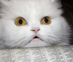 Looking for cat news you can use? Find it on The Daily Cat.