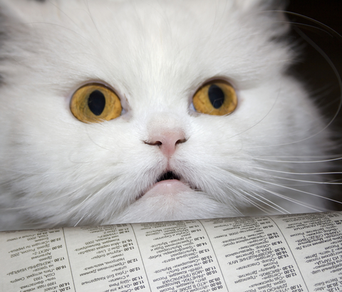 When she's not reading The Daily Cat, the cats enjoys newspapers.