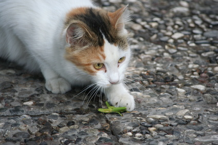 Is cricket cat food the next big thing?