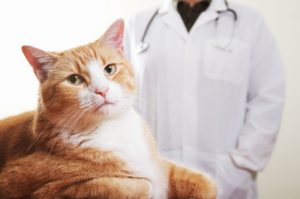 A growing number of companies are offering pet insurance as a benefit.