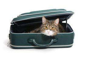 This cat is all packed up and ready to go, thanks to Amtrak's Pets on Trains policy