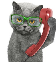 If you're a VCA client, you can skip the on-hold message and have Alexa call the vet.