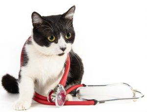 A cat friendly practice is as good for vets as it is for cats.