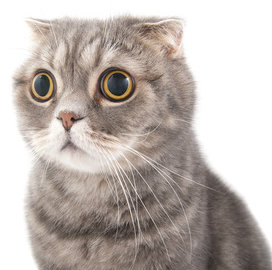 New study shows cats know their names.