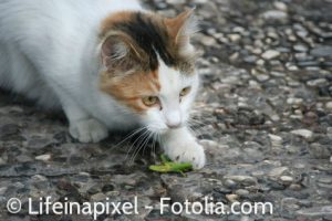 Cats love to eat bugs, but will they like insect-based cat food?