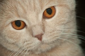 High-pitched noises can cause seizures in cats.