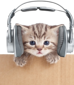 Is this cat enjoying purrsonalized music from one of Spotify's playlists for cats?