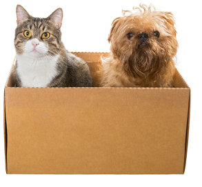 Pet supply retailers PetSmart and Chewy.com have decided to go their separate ways.